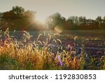 sunrays with chromatic... | Shutterstock . vector #1192830853