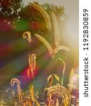 sunrays with chromatic... | Shutterstock . vector #1192830859