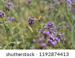 bee honey in the flying insects   Shutterstock . vector #1192874413
