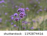 bee honey in the flying insects   Shutterstock . vector #1192874416
