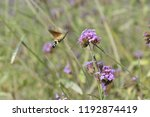 bee honey in the flying insects   Shutterstock . vector #1192874419