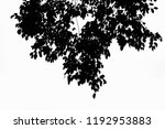 tree trunk leafless black and... | Shutterstock . vector #1192953883