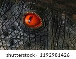 Eyes Of The Dinosaur The...