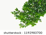 golden green leaves and... | Shutterstock . vector #1192983700