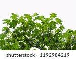 golden green leaves and... | Shutterstock . vector #1192984219