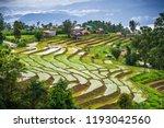 rice terrace in rural thailand. | Shutterstock . vector #1193042560