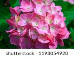 small pink flower in forest. | Shutterstock . vector #1193054920