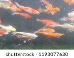koki on the water. blur | Shutterstock . vector #1193077630