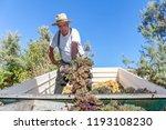 grape harvest  farmer with... | Shutterstock . vector #1193108230