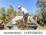 grape harvest  farmer with... | Shutterstock . vector #1193108233