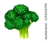 garden broccoli icon. isometric ... | Shutterstock .eps vector #1193154793