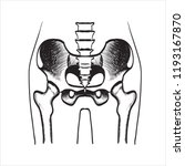fracture cervical hip vector... | Shutterstock .eps vector #1193167870