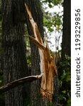 storm damage and broken tree in ...   Shutterstock . vector #1193229856