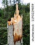 storm damage and broken tree in ...   Shutterstock . vector #1193229859
