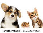 Stock photo kitten and puppy and hamster 1193234950