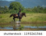 horse and jockey outdoor  | Shutterstock . vector #1193261566