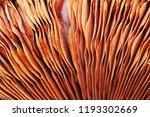 textural image of champignon...   Shutterstock . vector #1193302669