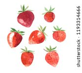 watercolor hand painted... | Shutterstock . vector #1193314666