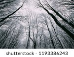 winter forest with frozen trees ... | Shutterstock . vector #1193386243