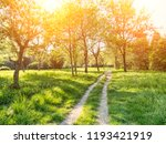 trees and grass in backyard at...   Shutterstock . vector #1193421919