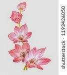 red crocuses on a light... | Shutterstock . vector #1193426050