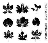 leaves imprints set isolated on ...   Shutterstock .eps vector #1193453443