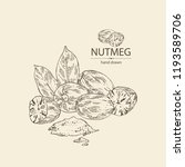 nutmeg  nut and leaves. vector... | Shutterstock .eps vector #1193589706