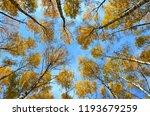 beautiful autumn landscape ... | Shutterstock . vector #1193679259