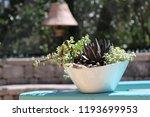 succulent container garden in... | Shutterstock . vector #1193699953