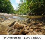 wild creek with green... | Shutterstock . vector #1193758000