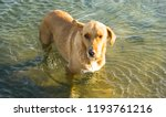 the dog swimming in the... | Shutterstock . vector #1193761216