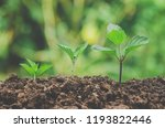 young plant and fresh sapling... | Shutterstock . vector #1193822446