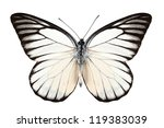 Stock photo butterfly species prioneris philonome isolated on white background 119383039
