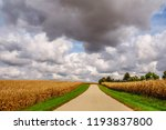 Small photo of Country road flanked by cornfields ends at another under big cumulus clouds early in autumn in northwestern Illinois, USA, for rural, agricultural, and meteorological themes