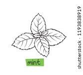 mint hand drawn vector... | Shutterstock .eps vector #1193838919