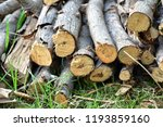 pile of wood. stack of felled... | Shutterstock . vector #1193859160