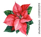 red poinsetia  beautiful flower ... | Shutterstock . vector #1193933293