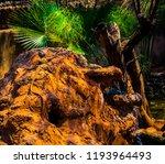lizard sitting on the rock | Shutterstock . vector #1193964493