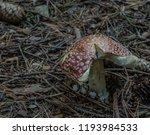 amanita muscaria mushroom in... | Shutterstock . vector #1193984533
