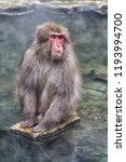 snow monkeys in a natural onsen ... | Shutterstock . vector #1193994700