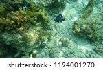 philippines underwater coral...   Shutterstock . vector #1194001270