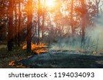 Forest Fire. Fallen Tree Is...