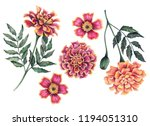 Stock photo watercolor set of marigold flowers hand drawn floral illustration isolated on a white background 1194051310