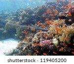 underwater view   shallow... | Shutterstock . vector #119405200