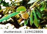 Autumn  Horse Chesnut
