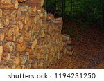 felled logs of trees in the... | Shutterstock . vector #1194231250