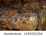 felled logs of trees in the... | Shutterstock . vector #1194231256
