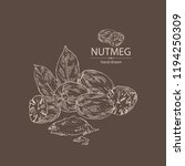 nutmeg  nut and leaves. vector... | Shutterstock .eps vector #1194250309