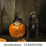 the cat in a witch hat is... | Shutterstock . vector #1194341506