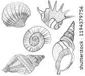 hand drawn shells  | Shutterstock .eps vector #1194379756